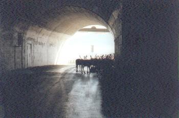 Tunnel mit Rentieren